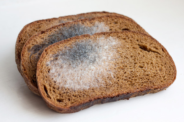 Mold gathers on an exposed bread surface